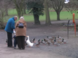 People feeding the ducks in the park on a winters day